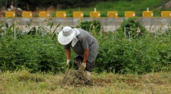 Aumentan número de parcelas con producción orgánica