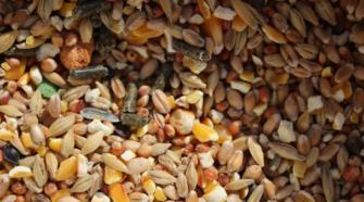 Bajan importaciones de maíz, trigo y frijol; crecen las de soya y sorgo