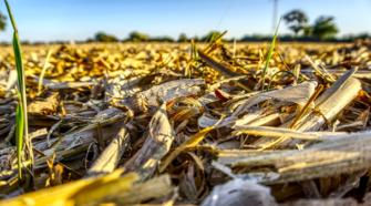 Tabasco consume mucho maíz, pero produce muy poco