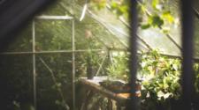 Ven potencial de agricultura orgánica en invernaderos