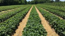 Con sustentabilidad, productos del campo valen más: CIMMYT