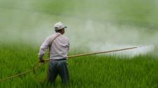 Fijan medidas para eliminar uso de plaguicidas de alta peligrosidad