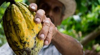 Senadora pide incrementar recursos a productores de cacao