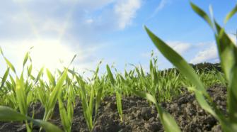 Recuperar los suelos permitirá producir más alimentos