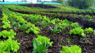 Definen autoridades y productores programa nacional para el sector orgánico