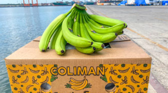 Inician exportaciones de plátano mexicano a China