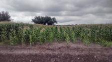 La agricultura de conservación genera más rentabilidad y recuperación de suelos