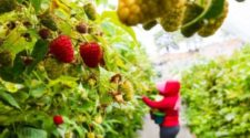 Aspira Gobierno de Jalisco a remplazar agroquímicos por agentes biológicos