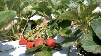 Seipasa obtiene registro fitosanitario para biofungicida