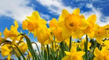 Con flores, gusanos y estiércol es posible regenerar los suelos