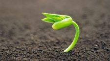 Estudiantes crean prototipo automatizado para germinar semillas