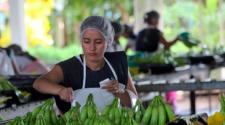 Producción orgánica de ONE Banana recibe certificación Fairtrade